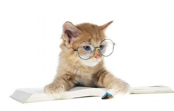 Ingrijire pisici